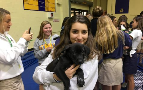 Puppies Relieve Student Stress